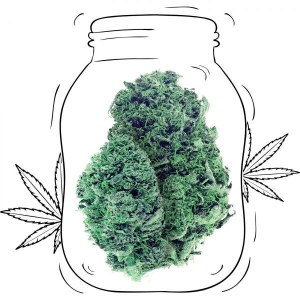 Buy Blue Dream Cannabis - Medicinal - Weed UK