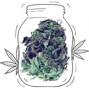 Buy Critical Cannabis - Medicinal - Weed UK