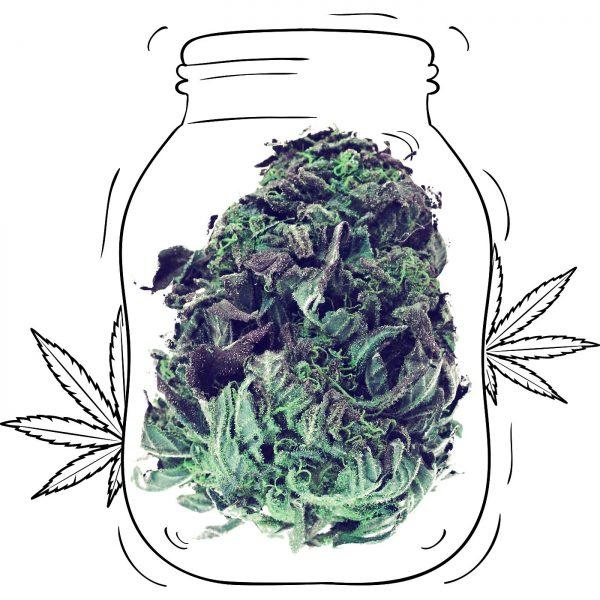 Buy Critical Cannabis - Medicinal - Weed UK