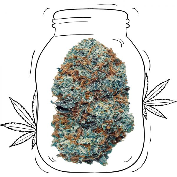 Buy Critical Kush Cannabis - Medicinal - Weed UK