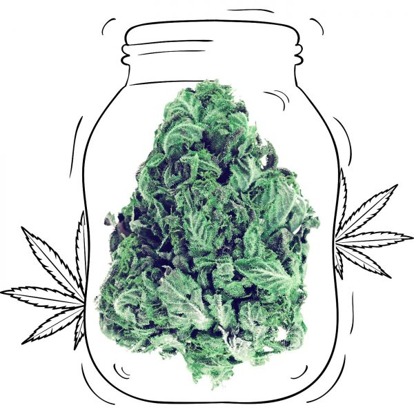 Buy Gorilla Green Cannabis - Medicinal - Weed UK