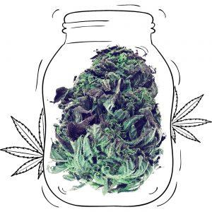 Buy Grandaddy Purple Cannabis - Medicinal - Weed UK