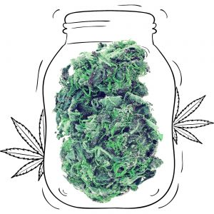 Buy Northern Lights Cannabis - Medicinal - Weed UK