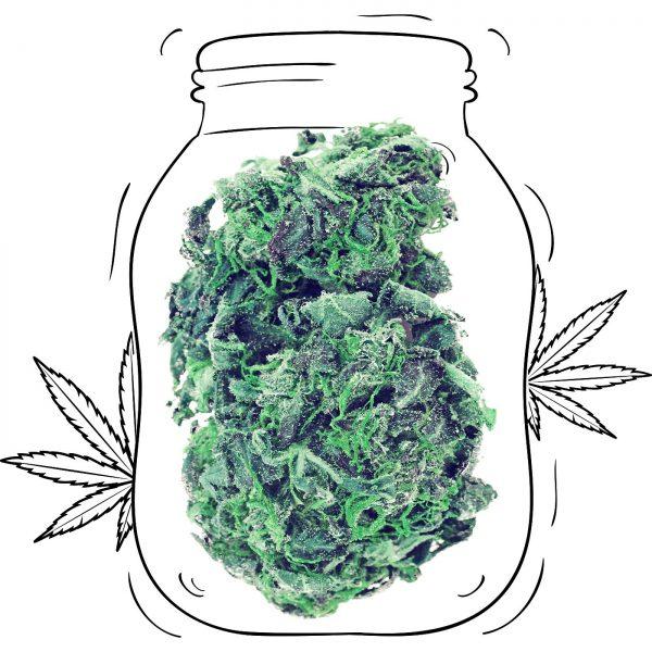 Buy Northern Lights Cannabis - Medicinal - Weed UK
